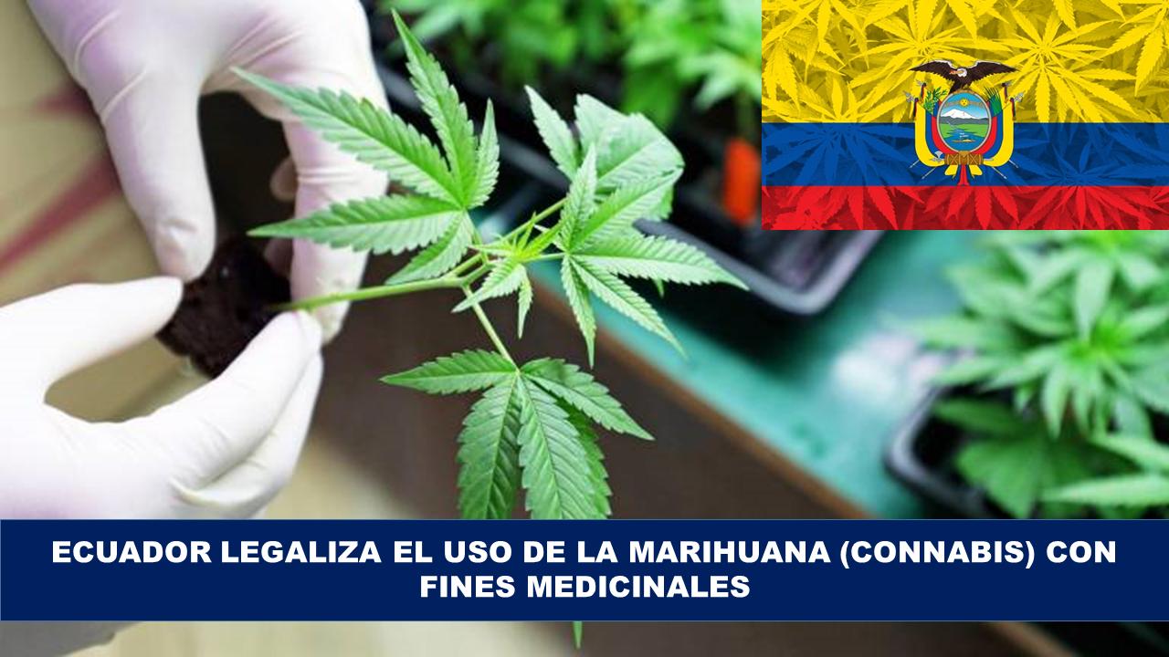 El consumo de la marihuana para el uso medicinal se legaliza en Ecuador