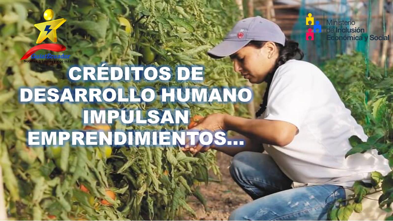 Créditos de Desarrollo Humano Impulsan Emprendimientos